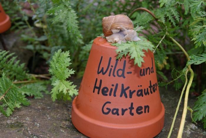 Wildkräutergarten